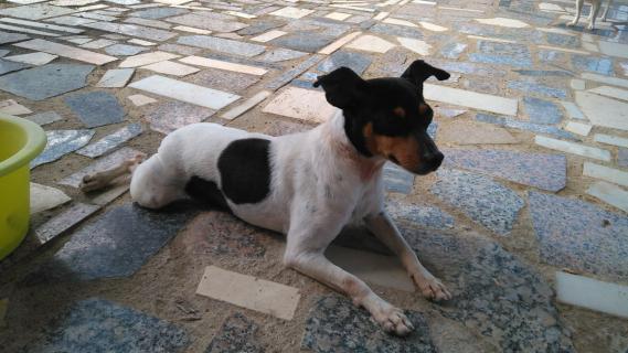 Maxcotea | Foto de TIKA - Perro, Raza: Bodeguero Andaluz | Maxcotea, Adopción de mascotas. Adopción de perros. Adopción de gatos.