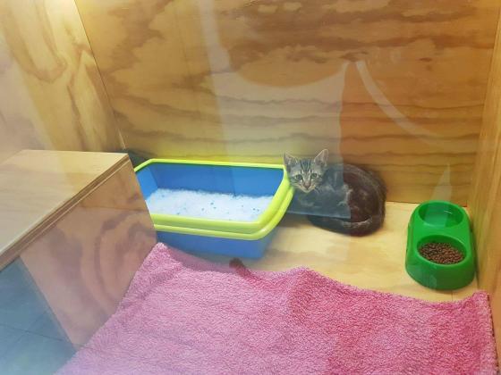 Maxcotea | Foto de Zipi - Gato, Raza: Gato común europeo | 🌸Zipi🌸 | Maxcotea, Adopción de mascotas. Adopción de perros. Adopción de gatos.