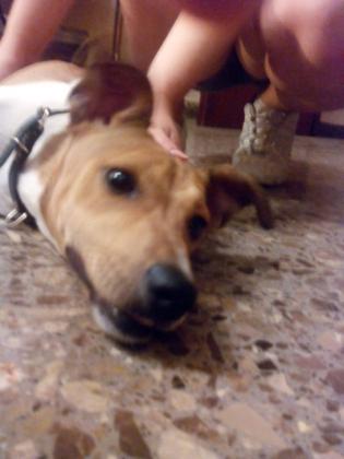 Maxcotea | Foto de Milo - Perro, Raza: Otro | Maxcotea, Adopción de mascotas. Adopción de perros. Adopción de gatos.