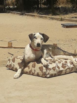 Maxcotea   Foto de WILLY - Perro, Raza: Otro   Willy   Maxcotea, Adopción de mascotas. Adopción de perros. Adopción de gatos.
