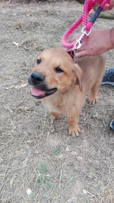 Maxcotea   Foto de Bryan - Perro, Raza: Otro   Maxcotea, Adopción de mascotas. Adopción de perros. Adopción de gatos.