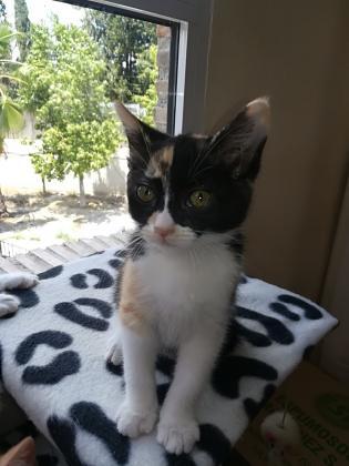 Maxcotea | Foto de Nina - Gato, Raza: Gato común europeo | Maxcotea, Adopción de mascotas. Adopción de perros. Adopción de gatos.