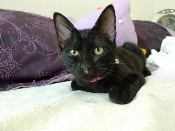Maxcotea | Foto de Vida - Gato, Raza: Gato común europeo | Maxcotea, Adopción de mascotas. Adopción de perros. Adopción de gatos.