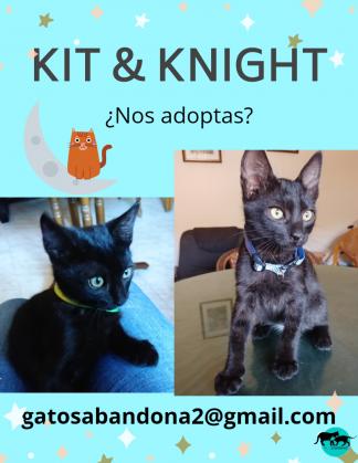Maxcotea | Foto de Kit - Gato, Raza: Gato común europeo | Maxcotea, Adopción de mascotas. Adopción de perros. Adopción de gatos.