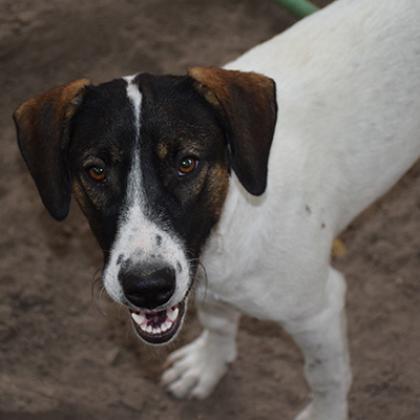 Maxcotea | Foto de Pachón - Perro, Raza: Otro | Maxcotea, Adopción de mascotas. Adopción de perros. Adopción de gatos.
