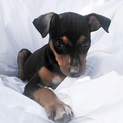 Maxcotea   Foto de África - Perro, Raza: Otro   Maxcotea, Adopción de mascotas. Adopción de perros. Adopción de gatos.