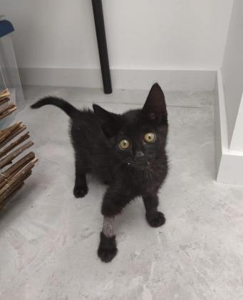 Maxcotea | Foto de DIVA EN ADOPCION - Gato, Raza: Otro | DIVA EN ADOPCION | Maxcotea, Adopción de mascotas. Adopción de perros. Adopción de gatos.