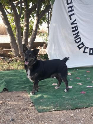 Maxcotea | Foto de Yako - Perro, Raza: Otro | YAKO 2 | Maxcotea, Adopción de mascotas. Adopción de perros. Adopción de gatos.