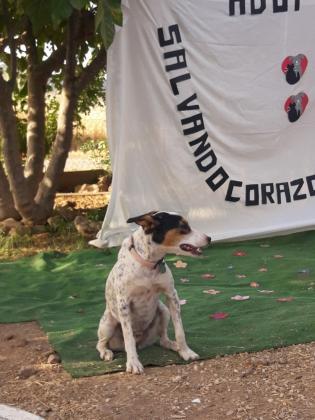 Maxcotea | Foto de Cristal - Perro, Raza: Otro | CRISTAL 2 | Maxcotea, Adopción de mascotas. Adopción de perros. Adopción de gatos.