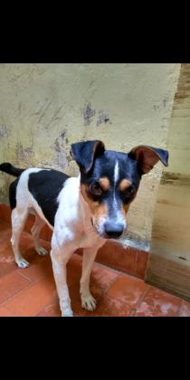 Maxcotea | Foto de Cody - Perro, Raza: Bodeguero Andaluz | Maxcotea, Adopción de mascotas. Adopción de perros. Adopción de gatos.