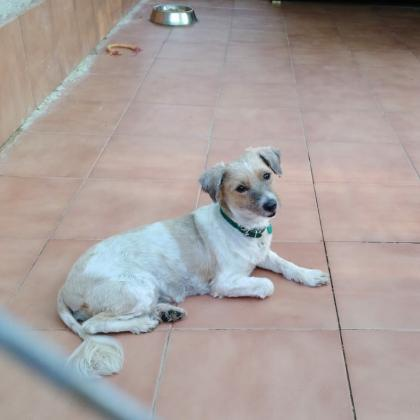 Maxcotea | Foto de ESTRELLA - Perro, Raza: Otro | Maxcotea, Adopción de mascotas. Adopción de perros. Adopción de gatos.