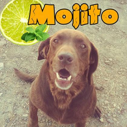 Maxcotea | Foto de Mojito - Perro, Raza: Otro | Maxcotea, Adopción de mascotas. Adopción de perros. Adopción de gatos.