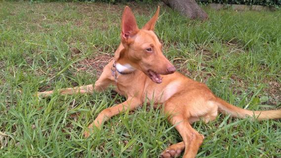 Maxcotea | Foto de JARED - Perro, Raza: Otro | Maxcotea, Adopción de mascotas. Adopción de perros. Adopción de gatos.
