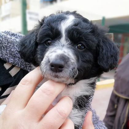 Maxcotea | Foto de Khaleesi  - Perro, Raza: Otro | Maxcotea, Adopción de mascotas. Adopción de perros. Adopción de gatos.