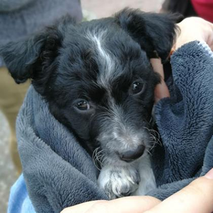 Maxcotea | Foto de Ron - Perro, Raza: Otro | Maxcotea, Adopción de mascotas. Adopción de perros. Adopción de gatos.