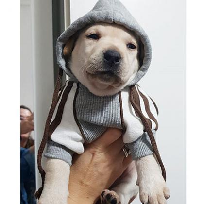 Maxcotea | Foto de Lady - Perro, Raza: Otro | Maxcotea, Adopción de mascotas. Adopción de perros. Adopción de gatos.