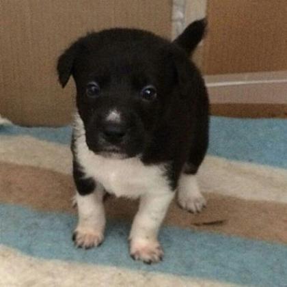 Maxcotea | Foto de Cala - Perro, Raza: Otro | Maxcotea, Adopción de mascotas. Adopción de perros. Adopción de gatos.