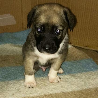 Maxcotea | Foto de Rayo - Perro, Raza: Otro | Maxcotea, Adopción de mascotas. Adopción de perros. Adopción de gatos.