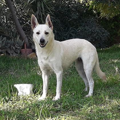Maxcotea | Foto de Loli - Perro, Raza: Otro | Maxcotea, Adopción de mascotas. Adopción de perros. Adopción de gatos.