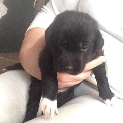 Maxcotea | Foto de Tor  - Perro, Raza: Otro | Maxcotea, Adopción de mascotas. Adopción de perros. Adopción de gatos.