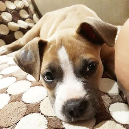 Maxcotea | Foto de Tony  - Perro, Raza: Otro | Maxcotea, Adopción de mascotas. Adopción de perros. Adopción de gatos.