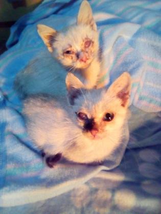Maxcotea | Foto de Hanzel y Gretel - Gato, Raza: Gato común europeo | 🌸Hanzel & Gretel🌸 | Maxcotea, Adopción de mascotas. Adopción de perros. Adopción de gatos.