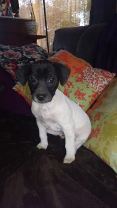 Maxcotea | Foto de MERLIN - Perro, Raza: Otro | Maxcotea, Adopción de mascotas. Adopción de perros. Adopción de gatos.