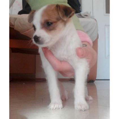 Maxcotea | Foto de Cata - Perro, Raza: Otro | Maxcotea, Adopción de mascotas. Adopción de perros. Adopción de gatos.