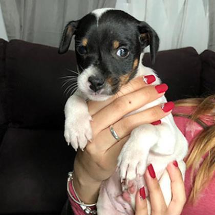 Maxcotea | Foto de Anubis - Perro, Raza: Bodeguero Andaluz | Maxcotea, Adopción de mascotas. Adopción de perros. Adopción de gatos.