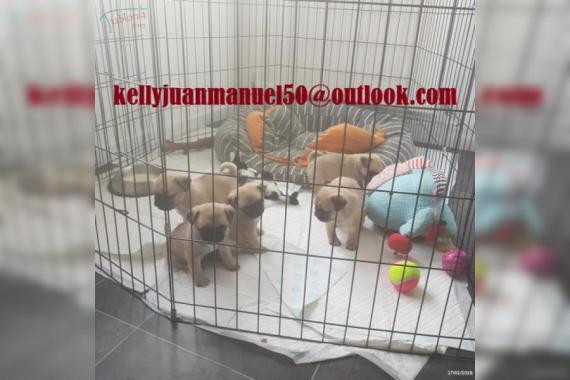 Maxcotea   Foto del maxcotero adkinsdolphine   Maxcotea, Adopción de mascotas. Adopción de perros. Adopción de gatos.