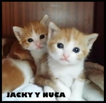 Maxcotea | Foto de Jacky y Nuca - Gato, Raza: Gato común europeo | Maxcotea, Adopción de mascotas. Adopción de perros. Adopción de gatos.