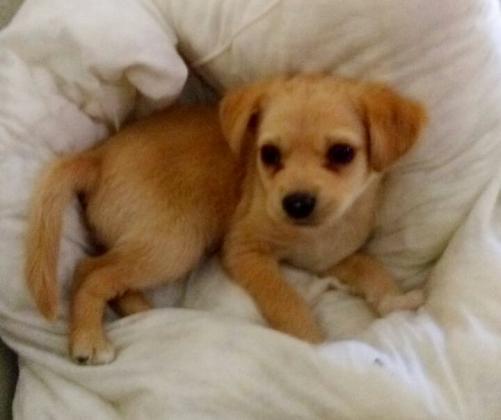 Maxcotea | Foto de Flash - Perro, Raza: Otro | Maxcotea, Adopción de mascotas. Adopción de perros. Adopción de gatos.