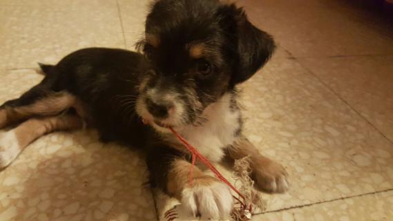 Maxcotea | Foto de Donald - Perro, Raza: Otro | Maxcotea, Adopción de mascotas. Adopción de perros. Adopción de gatos.