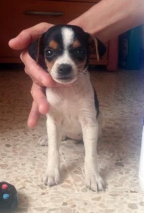 Maxcotea | Foto de Nala - Perro, Raza: Otro | Maxcotea, Adopción de mascotas. Adopción de perros. Adopción de gatos.