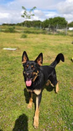 Maxcotea | Foto de Balto /baldo - Perro, Raza: Otro | Balto | Maxcotea, Adopción de mascotas. Adopción de perros. Adopción de gatos.