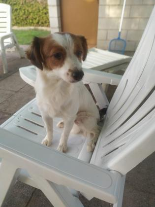Maxcotea | Foto de Krilin - Perro, Raza: Otro | Krilin | Maxcotea, Adopción de mascotas. Adopción de perros. Adopción de gatos.