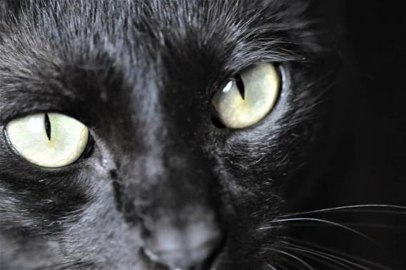 Maxcotea | Foto de EZE EN ACOGIDA O ADOPCION - Gato, Raza: Otro | Maxcotea, Adopción de mascotas. Adopción de perros. Adopción de gatos.