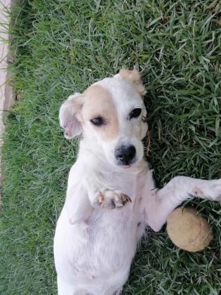 Maxcotea | Foto de Vega - Perro, Raza: Otro | Maxcotea, Adopción de mascotas. Adopción de perros. Adopción de gatos.