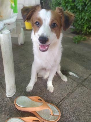 Maxcotea | Foto de Krilin - Perro, Raza: Otro | Maxcotea, Adopción de mascotas. Adopción de perros. Adopción de gatos.