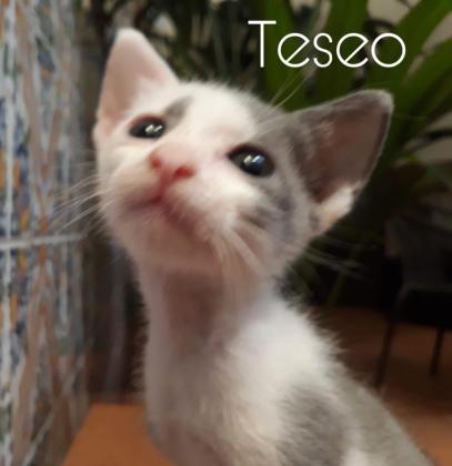 Maxcotea   Foto de Teseo - Gato, Raza: Otro   Teseo   Maxcotea, Adopción de mascotas. Adopción de perros. Adopción de gatos.