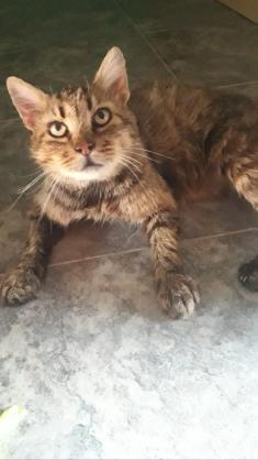 Maxcotea   Foto de General - Gato, Raza: Otro   Maxcotea, Adopción de mascotas. Adopción de perros. Adopción de gatos.