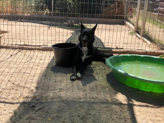 Maxcotea | Foto de Willy - Perro, Raza: Otro | Maxcotea, Adopción de mascotas. Adopción de perros. Adopción de gatos.