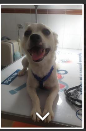 Maxcotea | Foto de Lia - Perro, Raza: Otro | Maxcotea, Adopción de mascotas. Adopción de perros. Adopción de gatos.