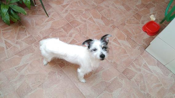 Maxcotea | Foto de TANI - Perro, Raza: Otro | Maxcotea, Adopción de mascotas. Adopción de perros. Adopción de gatos.