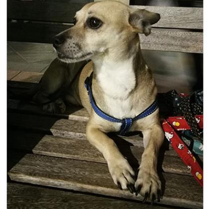 Maxcotea | Foto de Kiro - Perro, Raza: Otro | Maxcotea, Adopción de mascotas. Adopción de perros. Adopción de gatos.
