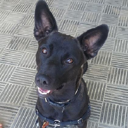 Maxcotea | Foto de Bertina - Perro, Raza: Otro | Maxcotea, Adopción de mascotas. Adopción de perros. Adopción de gatos.