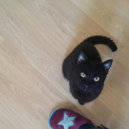 Maxcotea | Foto de Dulcinea - Gato, Raza: Gato común europeo | 🌸Dulcinea🌸 | Maxcotea, Adopción de mascotas. Adopción de perros. Adopción de gatos.