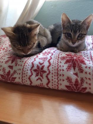 Maxcotea | Foto de Lory y Doly - Gato, Raza: Abisinio | 🌸Lory y Doly🌸 | Maxcotea, Adopción de mascotas. Adopción de perros. Adopción de gatos.