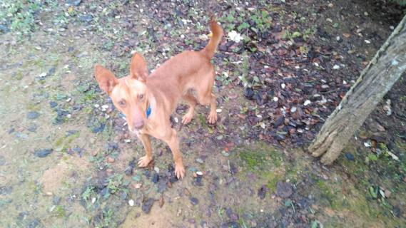 Maxcotea   Foto de JARED - Perro, Raza: Otro   JARED-2019   Maxcotea, Adopción de mascotas. Adopción de perros. Adopción de gatos.