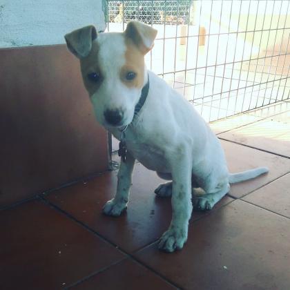 Maxcotea   Foto de BAMBU - Perro, Raza: Otro   BAMBU   Maxcotea, Adopción de mascotas. Adopción de perros. Adopción de gatos.
